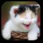 دانلود اخرین ورژن برنامه تصویرزمینه گربه برای اندروید Funny Cat Live Wallpaper v1.3