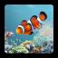 لایو والپیپر فوق العاده زیبا و دلنشین آکواریوم ماهی برای اندروید دانلود aniPet Aquarium Live Wallpaper v2.5.2